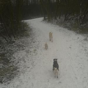 Dog Walk in a Snowy Chorlton Ees
