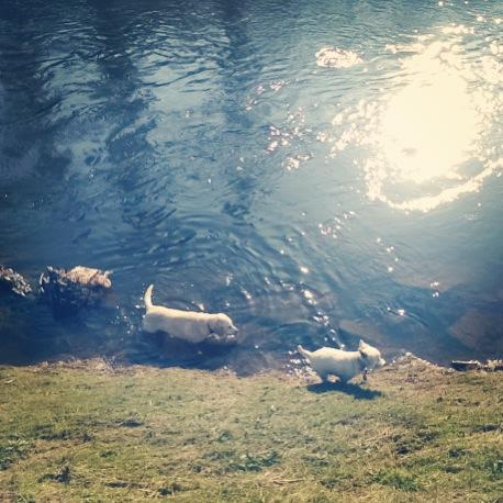 Dog Walking Mersey Valley