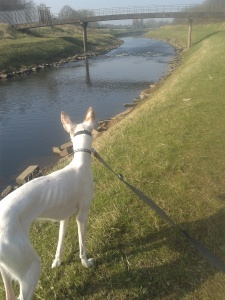 Connie enjoying the River Mersey View