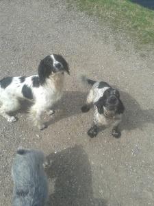 Monty & Fred