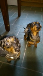 Winston & Hugo